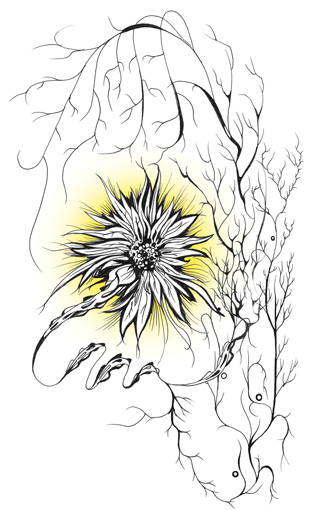 an illustration of sorts showing a flower black lines with a bit of yellow